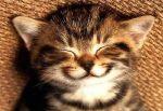 Kitten smiling